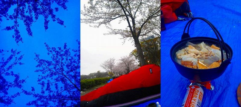 5時の桜/6時起床/6時半おでんを過熱