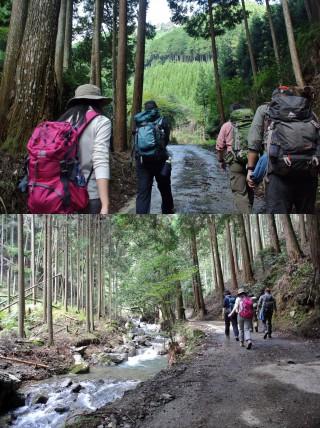 北山杉と河の間を通り抜けていくコース
