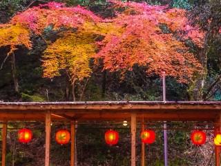 『紅葉橋』近辺では川辺のお茶席なども営業をしてハイシーズンの週末に彩を添えた。