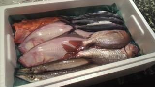 漁港では値段のつかないような『雑魚』にも本当は十分な価値がある問題は『多様性』だ。