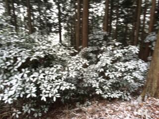 同日、ほぼ同山域の比叡山の様子、標高が1/3でも「吹雪」「積雪」が見られた。