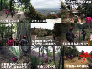 上の3枚はまだ天王山付近、そのあとゆるい登り下りが長く続く