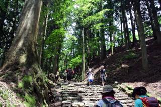 【経験】愛宕山境内は京都からバスで30分+2時間歩けば標高900mまでは到達できる。