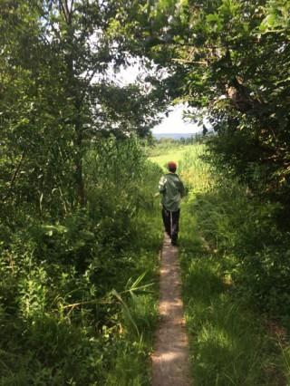 【湿原の道】このあたりには地図にない道がたくさんあり、地図にあってもなくなっている道もたくさんある。