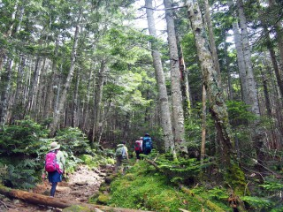 【美しい森を抜ける】山上でも森が尽きない