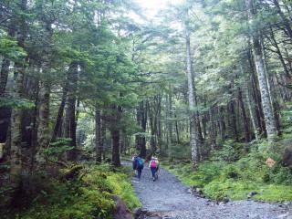 【美しい森の道】オーレン小屋近辺の道はほとんどがこういう感じでした。