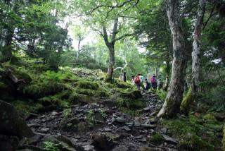 【高度はあがるが】森の中を緩やかに上がっていくルート、ゆっくり進めば誰でもいけるはずだ。