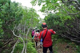 【ハイ松林】斜度は結構きつい。