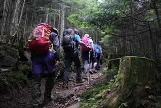 【森の道】美しい道で、路面もよい歩くのが楽しくなる好ルート!!