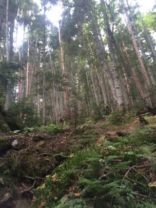 【しっかりしとした道】森と緩やかな傾斜の道には崩れがない。