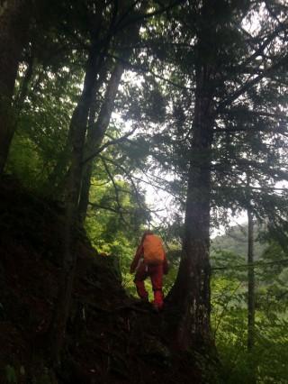 【森の中を行く】焼岳の地熱と栄養に支えられて、木々は隆々と茂っている