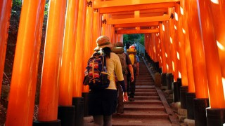 【千本鳥居】実際には一万本近くあるという「慎み深い」神社