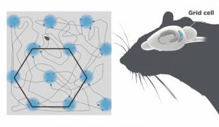 【位置関係】位置関係を「六角形で」把握する、位置と位置関係を把握する「二つの機能」は綿密にネットワークされている。