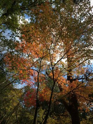 【美しい光景】紅葉と太陽の贈り物、モザイクのような光景でした。