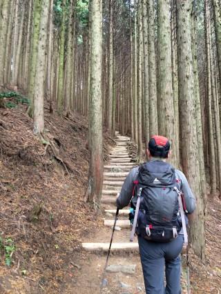 【後半は杉林に】道が「比叡山」っぽくなる。
