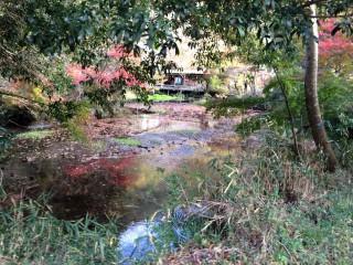 【八瀬の池】美しさは残っているが、もう名残。