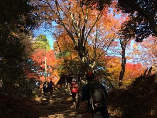 【11月末の休憩小屋】秋には紅葉で彩られるこの小屋くらいまでがキツイ