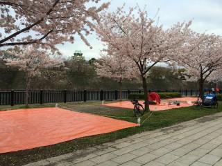 【場所とり難しい】今年は天気も悪かったから大阪城の正面がとれた。
