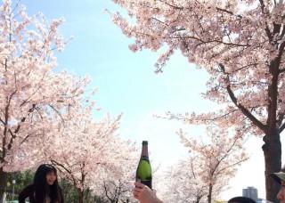 【花はサクラ】酒はシャンパン?