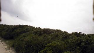 【カラス】未確認飛行物体を迎撃に来るカラスを捕らえた撃墜前の映像