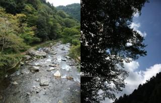 【清滝・月輪寺】清滝はもちろん山中にも紅葉が配されている。