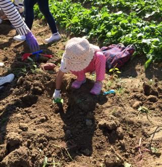【宝探し】小さな子供も頑張って掘り出していました。