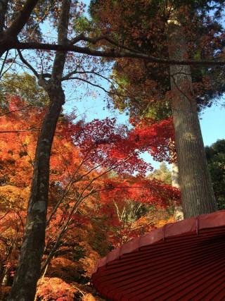 【紅葉の嵐山=高雄】硯亭