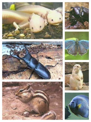 【昆虫・動物・魚とか】色々あります。