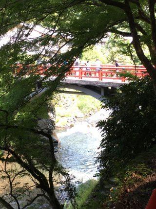 【清滝川】夏の風景