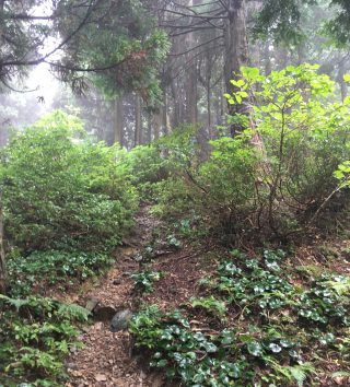 【序盤は森の中】後半も森の中ですが、斜度は急です。