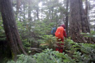 【森の中】道に見えないのでここは要注意