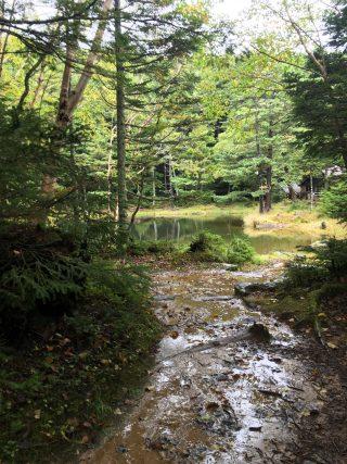 【みどり池】二度目のしらびそ小屋、逆のルートからの風景
