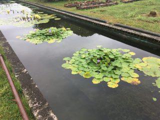 【速報】大阪市立大附属植物園「コスモスはダウン!!」